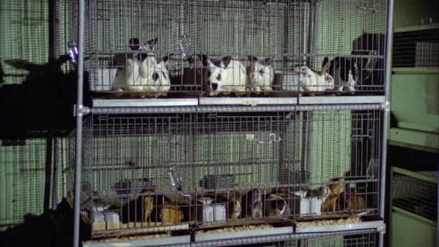 ms rabbits and guinea pigs in cages - petshop stock videos and b-roll footage