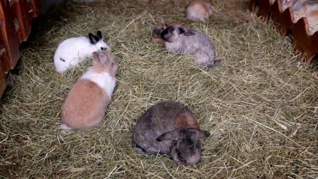 Rabbits eat green juicy grass