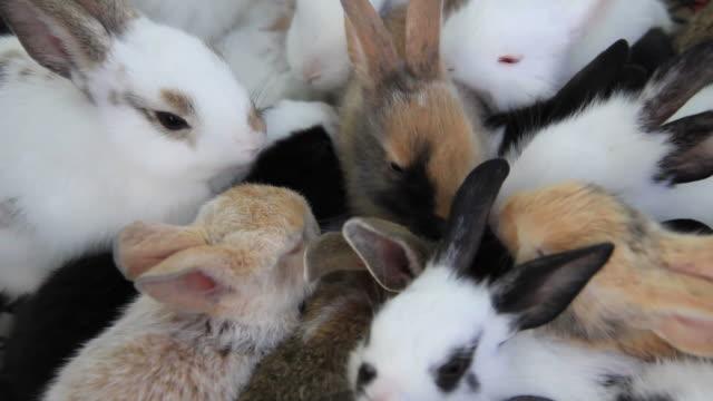 Rabbits eating food.