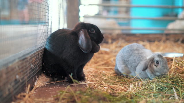 rabbits eating grass and hay - hay texture stock videos & royalty-free footage