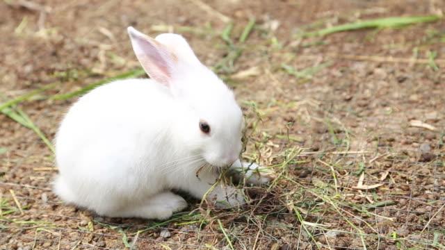 Rabbits Eating (HD)
