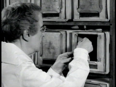 research rabbits in lab cages male taking rabbit out of cage mice in cages woman holding mouse pathologist maude slye w/ microscope dr cc little at... - pathologist stock videos and b-roll footage