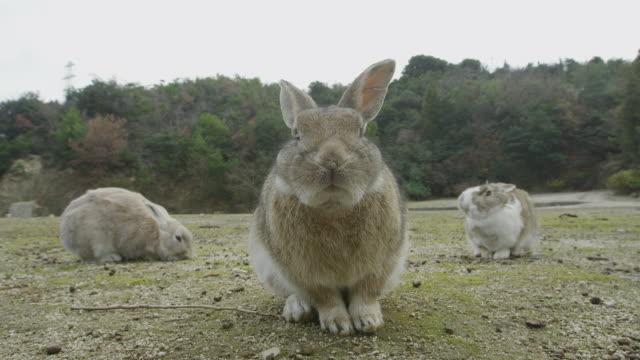 rabbits in okunoshima island - rabbit animal stock videos and b-roll footage