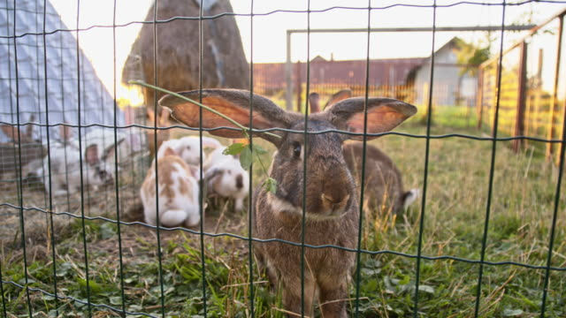 slo mo rabbits in the enclosure - animal pen stock videos & royalty-free footage
