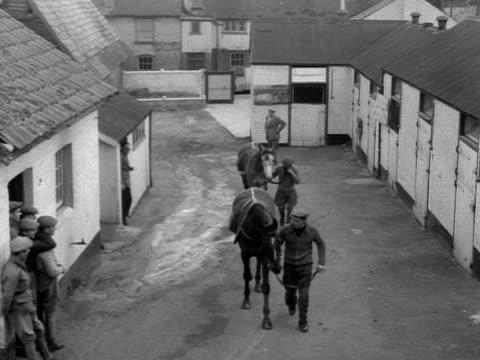 vídeos y material grabado en eventos de stock de race horses are led around a yard by stable lads - brida arnés