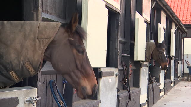 race horses in stables after an outbreak of equine flu caused all british race fixtures to be called off doncaster - animal head stock videos & royalty-free footage