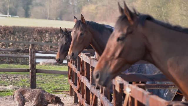 race horses in stables at hungerford - hooved animal stock videos & royalty-free footage