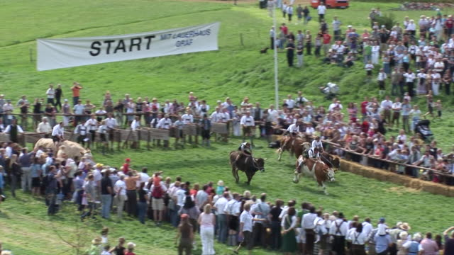 ms ts race of bullock and riders and  lots of people watching it / bad toelz-wolfratshausen, bavaria, germany - arbeitstier stock-videos und b-roll-filmmaterial