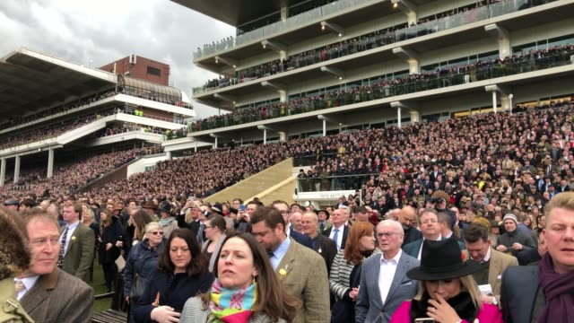 racegoers watch the racing in the gold cup at cheltenham racecourse on gold cup day on march 16 2018 in cheltenham england thousands of racegoers... - cheltenham racecourse stock videos and b-roll footage