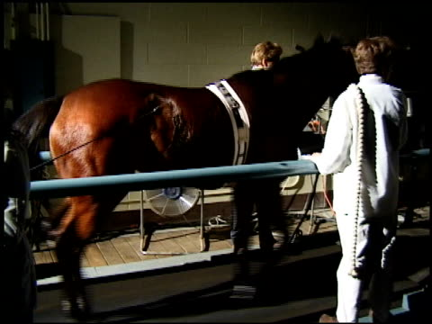 a racehorse trots on a treadmill. - physiotherapy stock videos & royalty-free footage