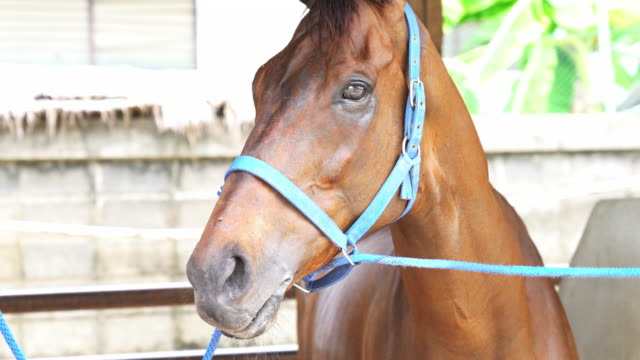 vídeos y material grabado en eventos de stock de caballo de carrera - galopar