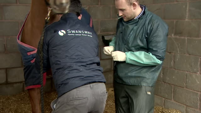 racehorses being vaccinated to prevent catching equine flu after an outbreak - 英チェシャー州点の映像素材/bロール