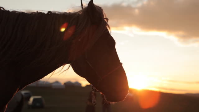 racing horse's head against sunset - pferd stock-videos und b-roll-filmmaterial