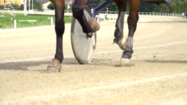 hd super slow mo: racing horse's hoofs - trot animal gait stock videos & royalty-free footage