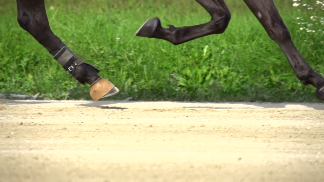 hd super slow mo: racing horse's hoofs - gallop animal gait stock videos & royalty-free footage