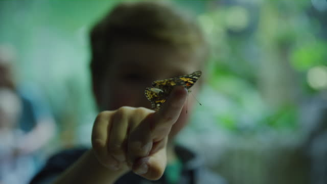 rack focus close up of butterfly on finger of smiling boy / draper, utah, united states - farfalla video stock e b–roll
