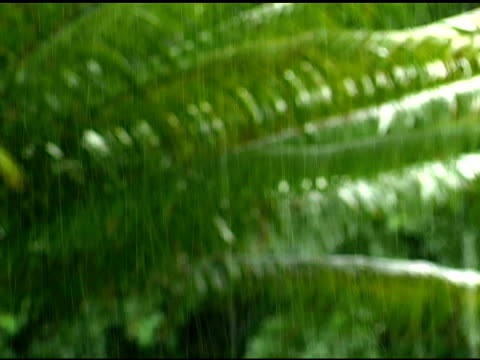 rack focus close-up of rain falling on palm tree - 水の形態点の映像素材/bロール