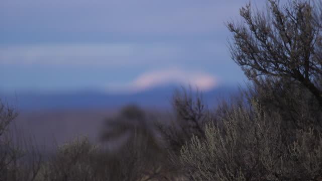 rack focus distant mountain bg & plants fg - wiese点の映像素材/bロール