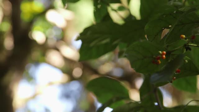 rack focus, foliage in new zealand - saftig bildbanksvideor och videomaterial från bakom kulisserna