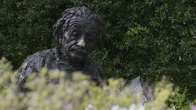 stockvideo's en b-roll-footage met rack focus from bushes to albert einstein statue in dc - albert einstein