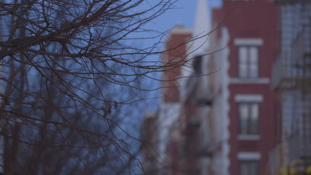 rack focus from tree branches in winter to residential buildings - cold temperature stock videos & royalty-free footage