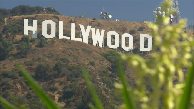Rack focus on Hollywood sign from behind tropical tree / defocus / Los Angeles, California