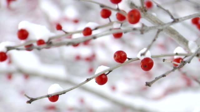 vídeos y material grabado en eventos de stock de parrilla focus en winterberries - frutas del bosque