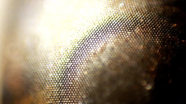 vídeos y material grabado en eventos de stock de cambio de foco de ojo compuesto - micrografía de luz