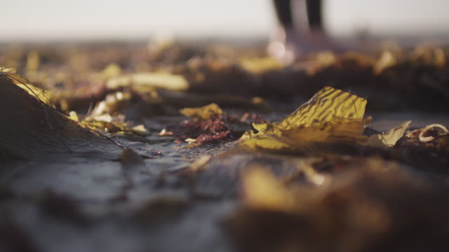 Rack focus, person stands on beached seaweed