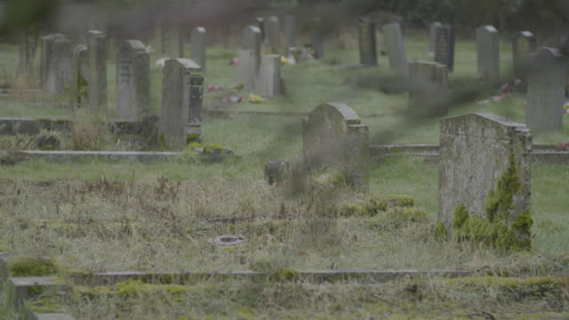 rack focus shot from budding twigs to the graveyard of the church of st mary in troston - condensation stock videos & royalty-free footage