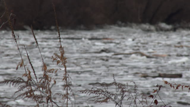 vídeos y material grabado en eventos de stock de reeds gently sway in the wind in the foreground on the banks of the housatonic river as the camera then focuses on the background revealing thick... - tentación