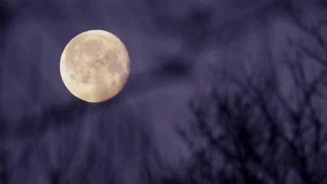 rack focus view of moon rising - bare tree stock videos & royalty-free footage