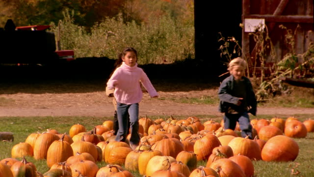 rack focus wide shot girl and two boys running + jumping over pumpkins - adoption stock videos and b-roll footage