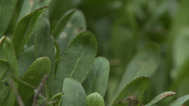 rack focusing between small green herbs - thick stock videos & royalty-free footage
