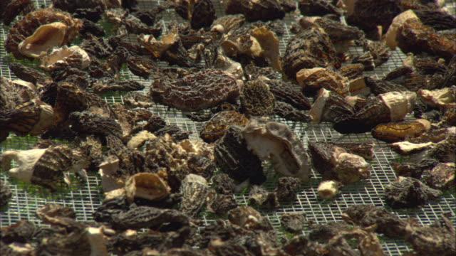 cu pan rack of freshly picked morel mushrooms drying in sun / marion, montana, usa - dried food stock videos & royalty-free footage