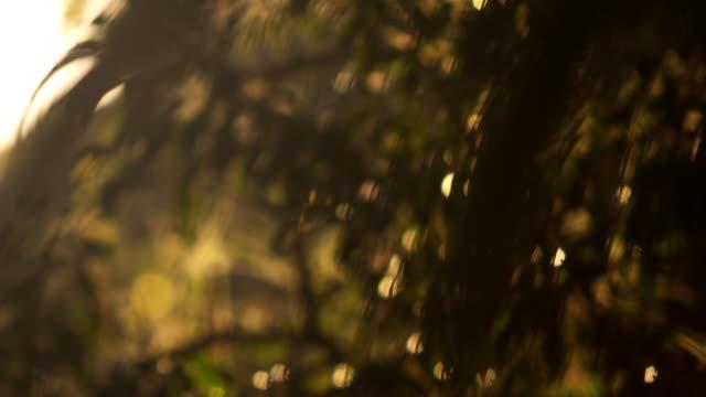 stockvideo's en b-roll-footage met racking focus footage of tree leaves - infaden