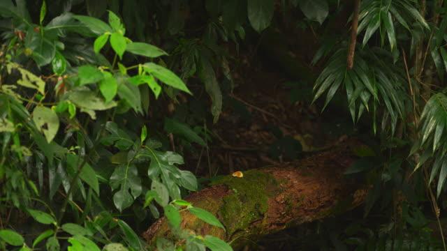 racking focus jungle footage - 2013 stock videos & royalty-free footage