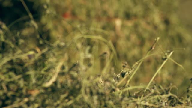 racking focus of hay - プロボ点の映像素材/bロール