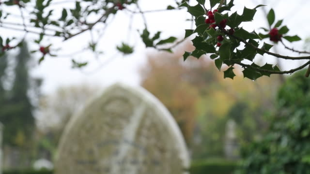 racking focus shot of a tombstone covered in ivy in arnos vale cemetery at autumn on november 1 2016 in bristol england - gravestone stock videos & royalty-free footage