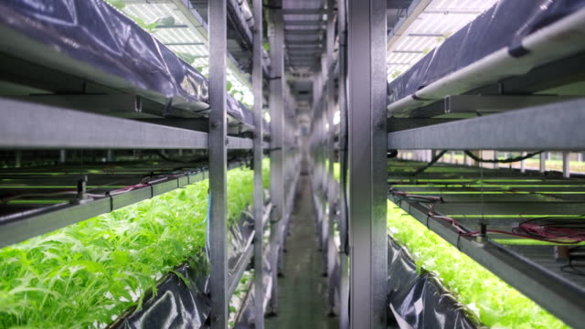vídeos de stock e filmes b-roll de racks of cultivated plant crops at indoor vertical farm - alface