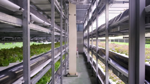 racks of cultivated plant crops at indoor vertical farm - fotosintesi video stock e b–roll