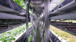 Racks of Cultivated Plant Crops at Indoor Vertical Farm