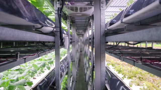 vídeos de stock e filmes b-roll de racks of cultivated plant crops at indoor vertical farm - agricultura