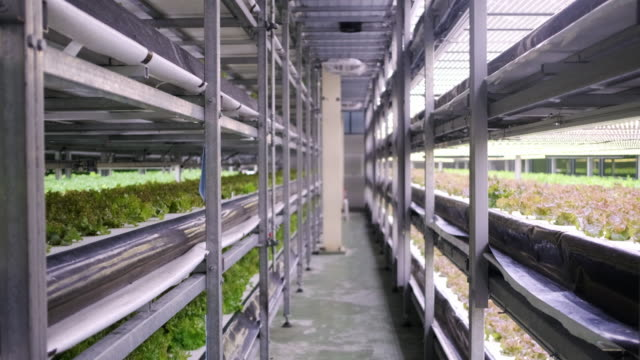 vídeos de stock e filmes b-roll de racks of cultivated plant crops at indoor vertical farm - luz led