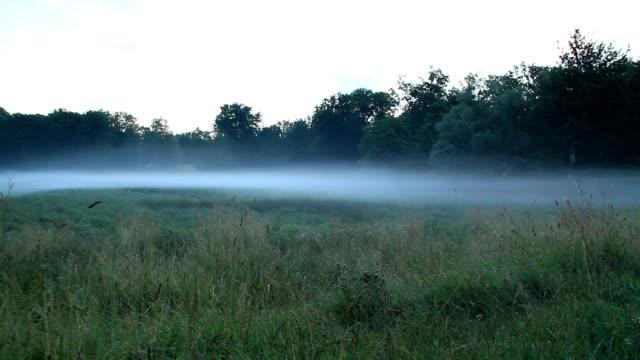 vídeos y material grabado en eventos de stock de radiation fog - hierba familia de la hierba