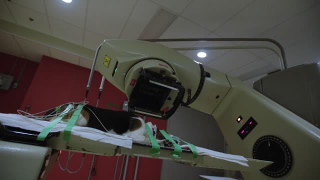 Radiotherapy machine rotates around dog