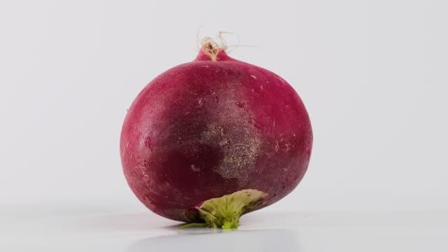 radishes turn on white background - crucifers stock videos & royalty-free footage