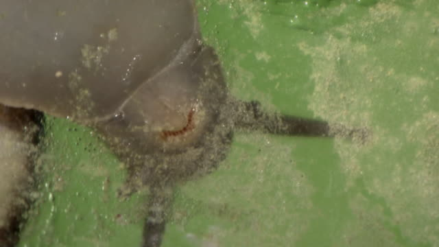 Radula Of A Snail
