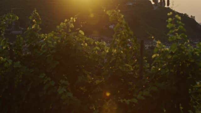 raggio di sole all'alba