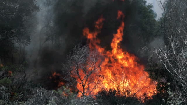 Raging Bushes on Fire in Southern California